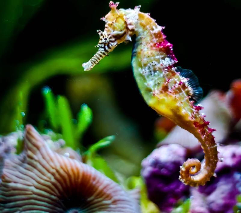 Star & Seahorse